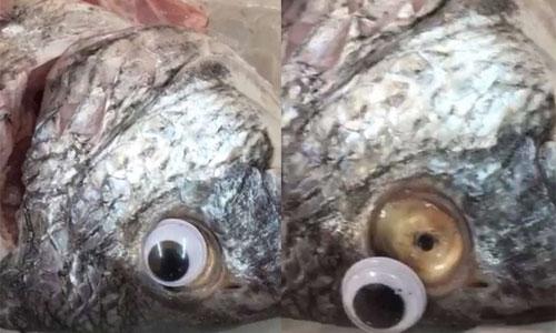 New method of cheating! Plastic eyes on Fish