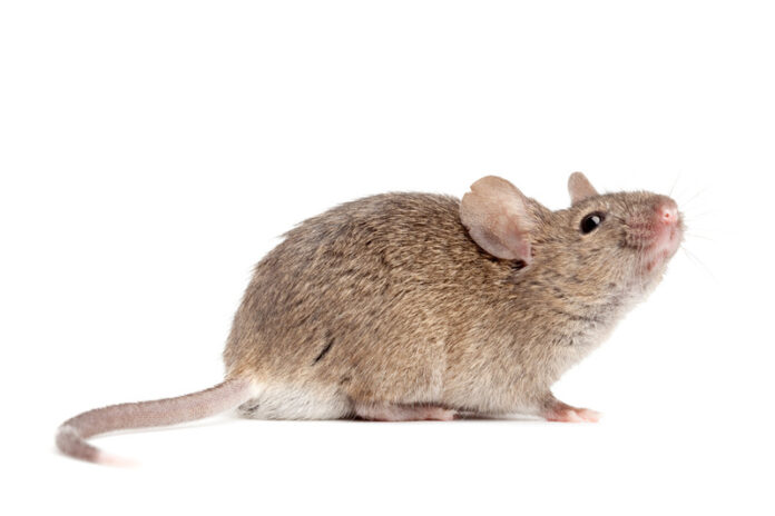 What are the Signs and symptoms of Hantavirus?