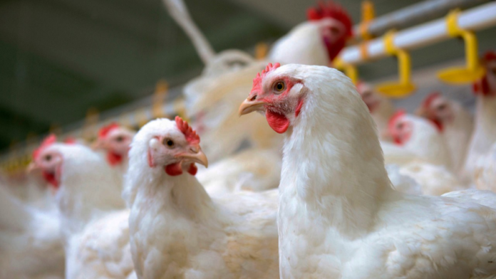 Kuwait bans poultry imports from 3 countries